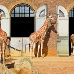 Animal Attractions: ZSL London Zoo – The Perfect Family Day Out?